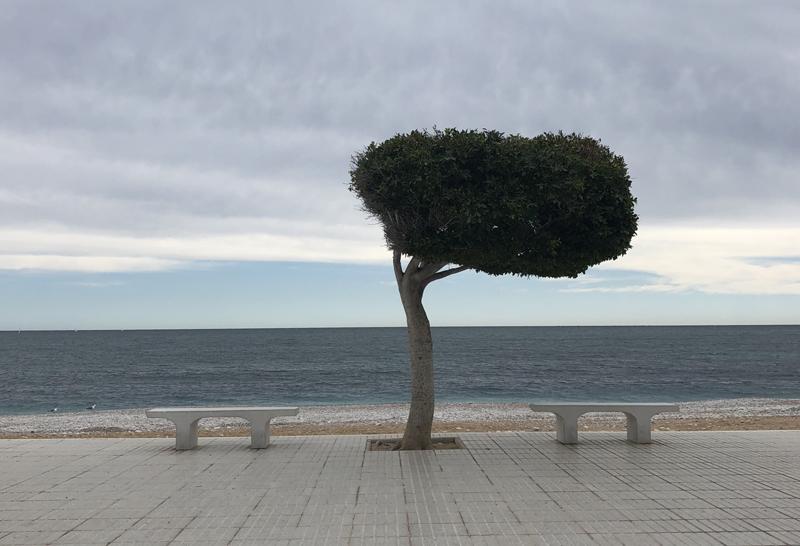 Altea_tree