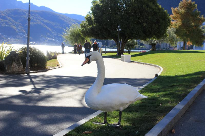 Lugano6