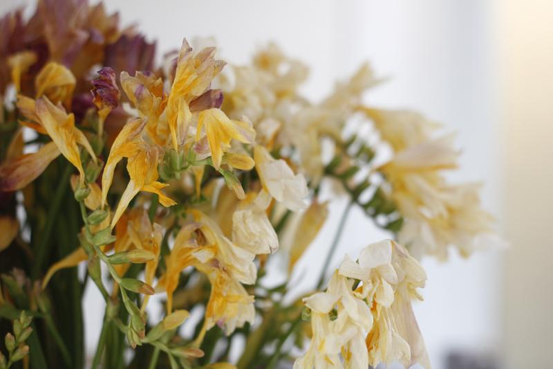 visne-blomster